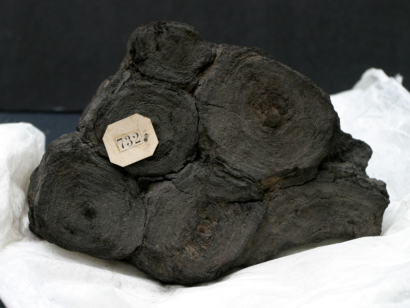 PHerc. 732, blocco di papiri ercolanesi carbonizzati disposti a piramide